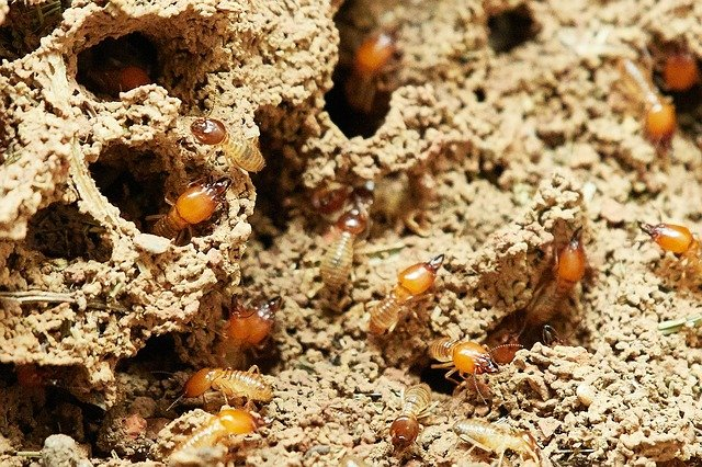 Signs of Termites that every home owner should know about